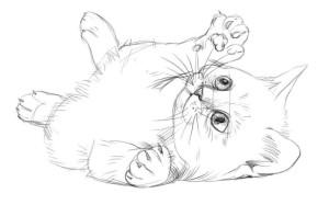 Как-нарисовать-котёнка-карандашом-поэтапно-4