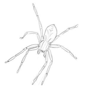 Как-нарисовать-паука-карандашом-поэтапно-3