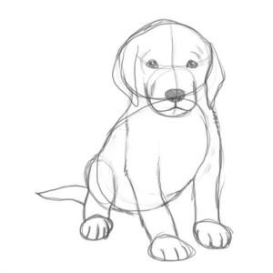Как-нарисовать-щенка-3