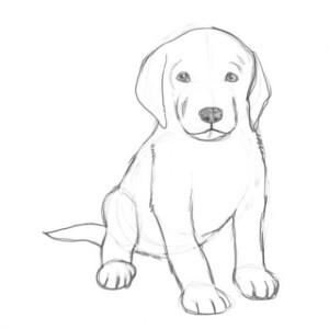 Как-нарисовать-щенка-4