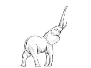 Как-нарисовать-слона-карандашом-поэтапно-4