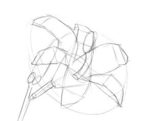 Как-нарисовать-цветок-карандашом-2