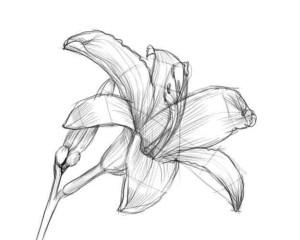 Как-нарисовать-цветок-карандашом-4