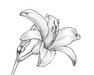 Как-нарисовать-цветок-карандашом-5