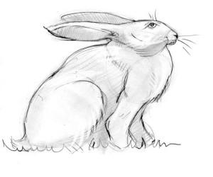 как-нарисовать-зайца-5