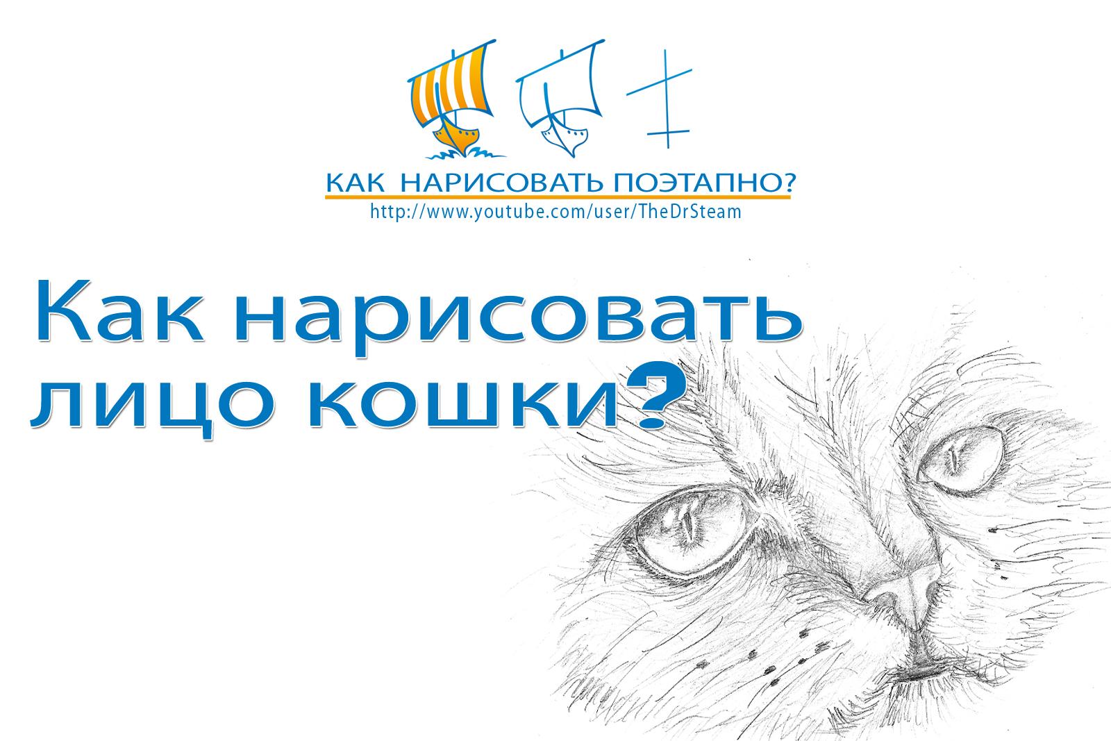Видео: как нарисовать лицо кошки