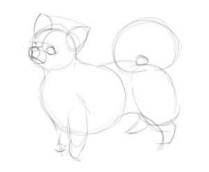 Как-нарисовать-Чихуахуа-карандашом-поэтапно-1