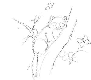 Как-нарисовать-енота-карандашом-поэтапно-3