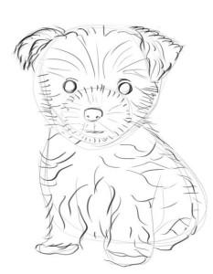 Как-нарисовать-йоркширского-терьера-карандашом-3