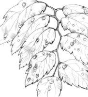 Как нарисовать капли