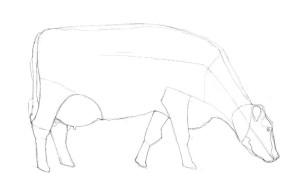 Как-нарисовать-корову-карандашом-поэтапно-3