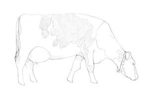 Как-нарисовать-корову-карандашом-поэтапно-4