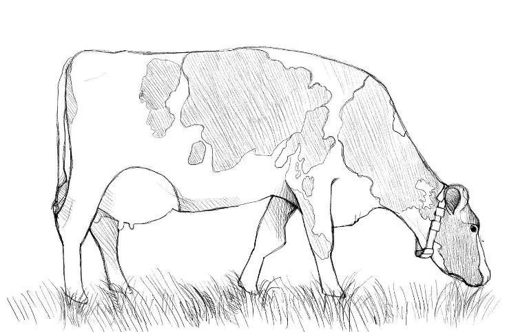Как нарисовать корову?