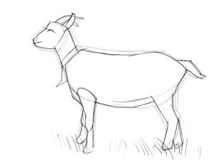Как-нарисовать-козу-карандашом-поэтапно-2