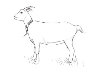 Как-нарисовать-козу-карандашом-поэтапно-3