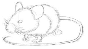 Как-нарисовать-мышку-карандашом-3