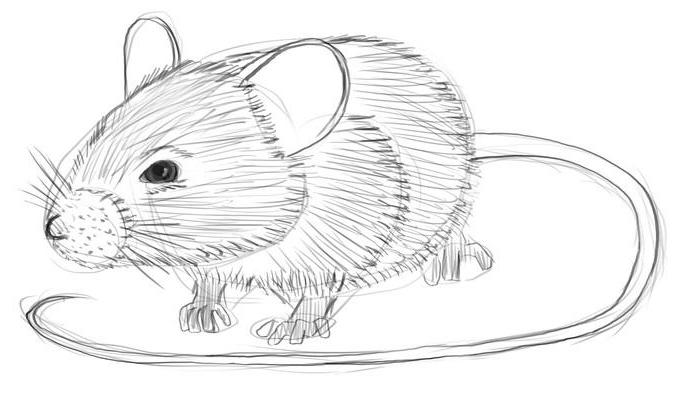 Как нарисовать мышка карандашом поэтапно