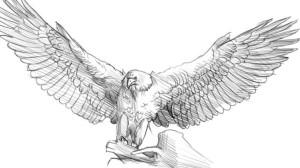Как-нарисовать-орла-карандашом-4