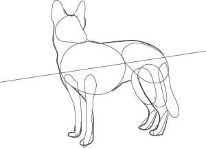 Как-нарисовать-овчарку-карандашом-поэтапно-2