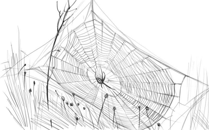 Как нарисовать паутину