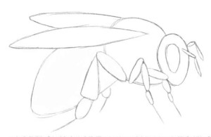 Как-нарисовать-пчелу-2