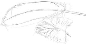 Как-нарисовать-перья-карандашом-поэтапно-3