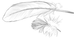 Как-нарисовать-перья-карандашом-поэтапно-4