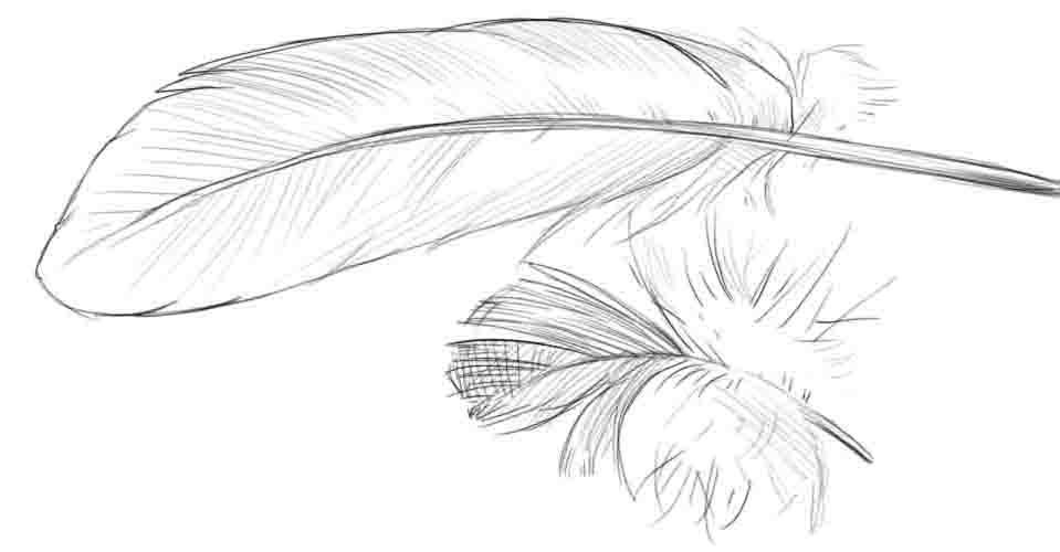 Как нарисовать перья