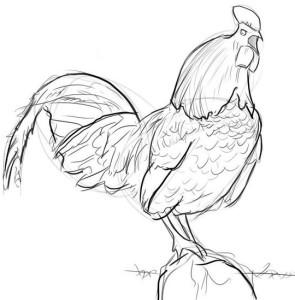 Как-нарисовать-петуха-карандашом-поэтапно-4
