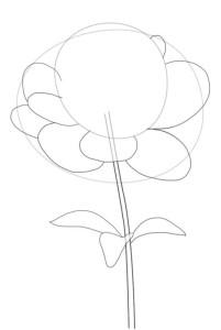 Как-нарисовать-пион-карандашом-поэтапно-3