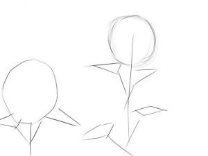Как-нарисовать-подсолнух-карандашом-поэтапно-1