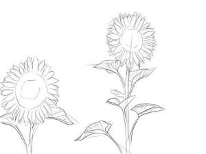 Как-нарисовать-подсолнух-карандашом-поэтапно-3