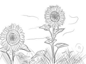 Как-нарисовать-подсолнух-карандашом-поэтапно-4