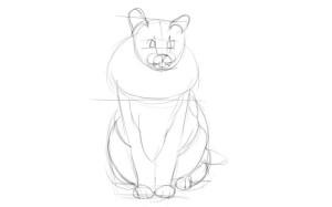 Как-нарисовать-шерсть-карандашом-поэтапно-2