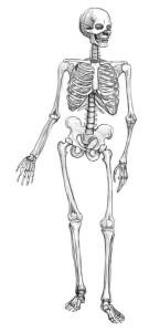 Как-нарисовать-скелет-карандашом-поэтапно-4
