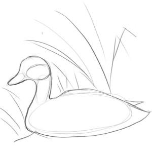 Как-нарисовать-утку-карандашом-поэтапно-2
