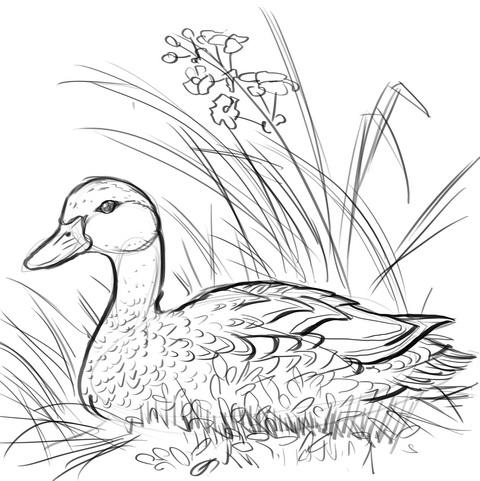 Как нарисовать утку