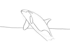 как-нарисовать-кита-3