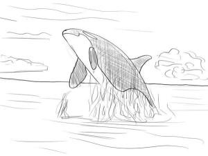 как-нарисовать-кита-4