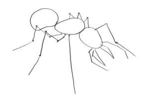 как-нарисовать-муравья-карандашом-1