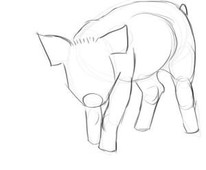 как-нарисовать-свинью-2