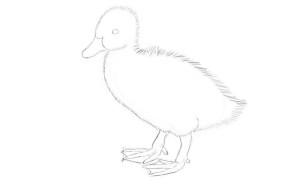 как-нарисовать-утенка-3