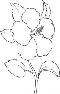 Как нарисовать китайскую розу?