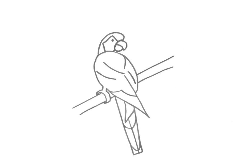 Как нарисовать попугая