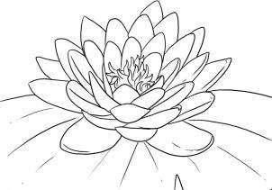 Как нарисовать лотос?