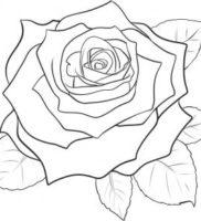 Как нарисовать цветок розы
