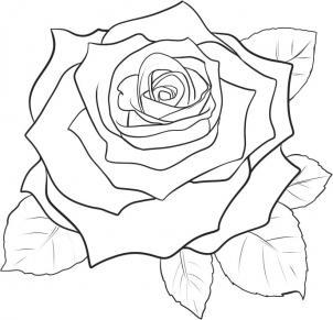 Как нарисовать цветок розы?