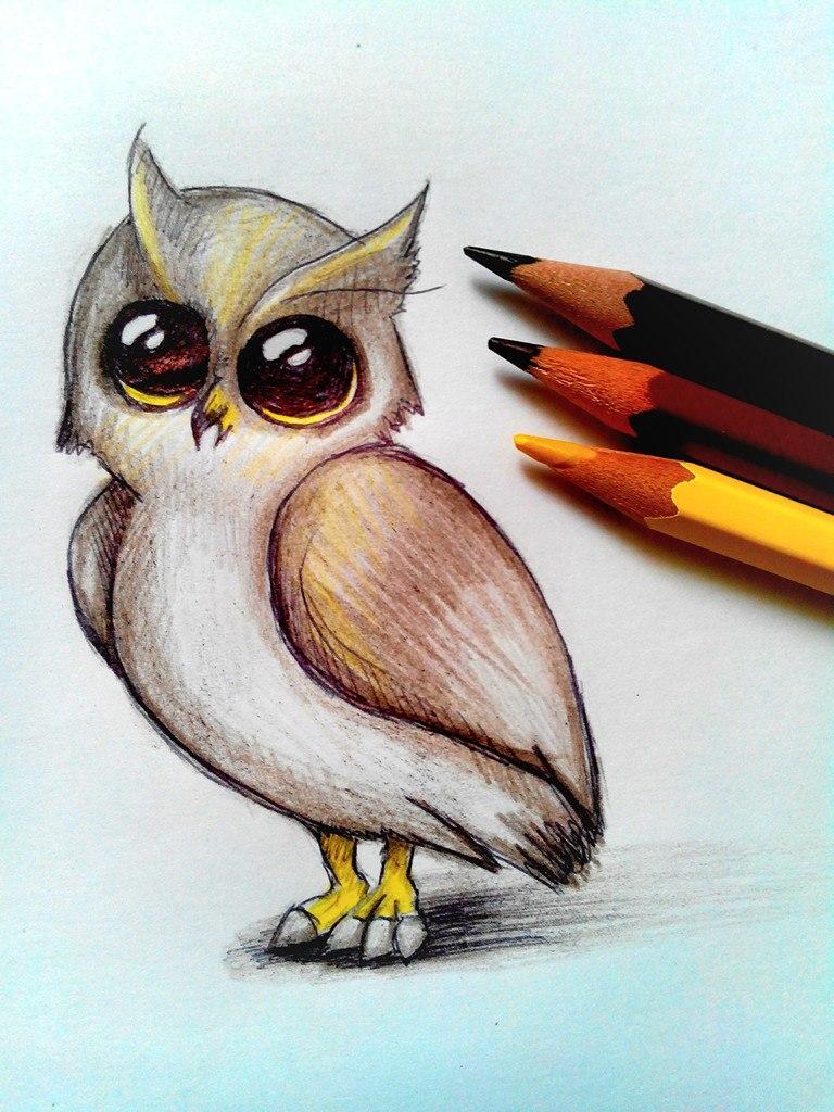 Как нарисовать сову цветными карандашами поэтапно