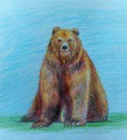 Как нарисовать медведя цветными карандашами