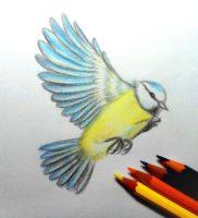 Как нарисовать птицу цветными карандашами